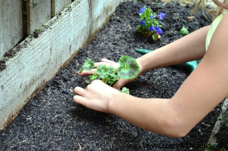 Plant Me Now (5)