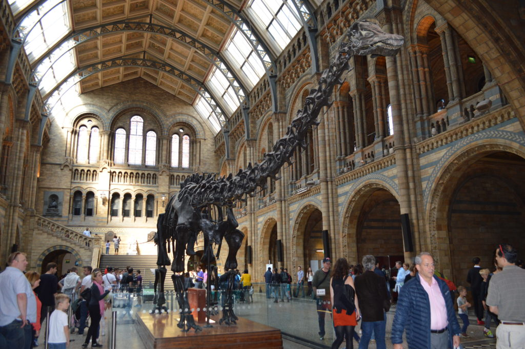 London attractions, Natural History Museum