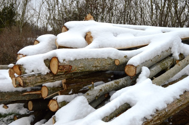 snow day, snowy log pile, log pile, winter, snowy winter, cold winter, british winter,