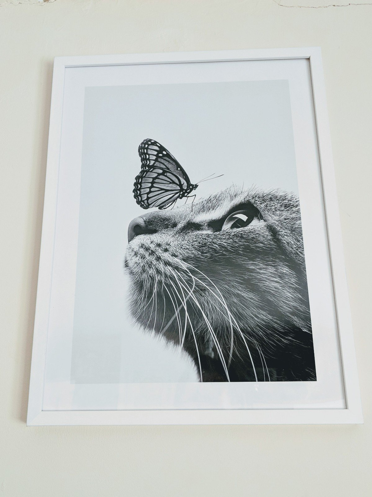 Butterfly Cat framed print from Desenio affordable art, posters, prints and frames