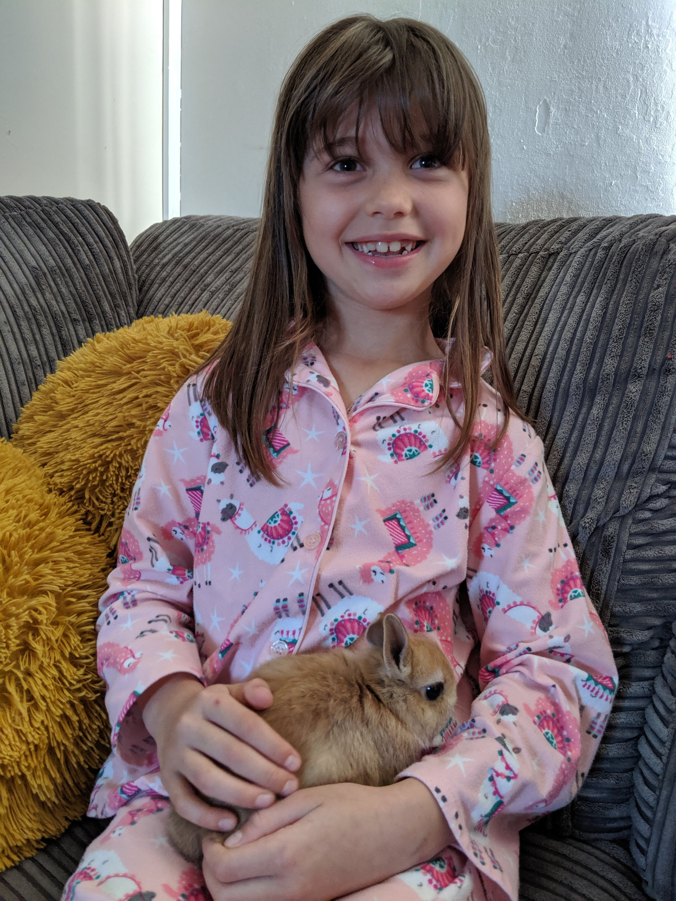 Our Orange Netherland Dwarf Rabbits named Max and Ruby